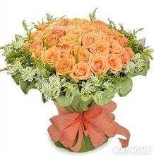 玫瑰花多少钱一朵 玫瑰花品种介绍【今日信息】
